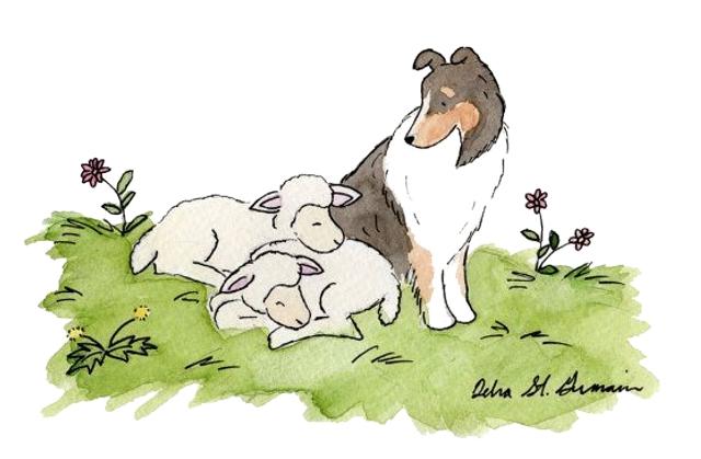 Félix, a kis sheltie nagyon izgatott volt. Ancsa, a gazdája úgy tette be az utazódobozába az autóba, hogy ma valami különlegeset fognak csinálni. A kutyus egész úton tanakodott, vajon mit fognak csinálni? Talán elmennek az állatkereskedésbe, ahol azok a fincsi csontok vannak.